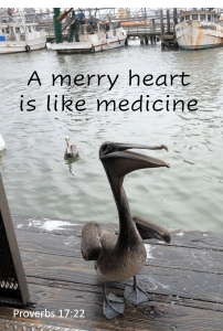 """Photo of a pelican that looks like it is laughing, with text overlay that says, """"A merry heart is like medicine.""""  Nature can help us find joy when life is hard."""