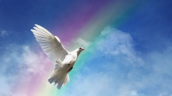 photo of a dove, the symbol of peace
