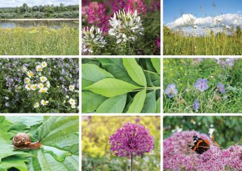 A collage of many aspects of nature, which helps us find health, hope, joy, and peace.