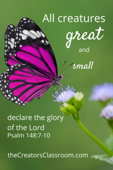 Photo of a butterfly on flowers and scripture verse from Psalm 148:7-10. which demonstrates connecting with God through nature.