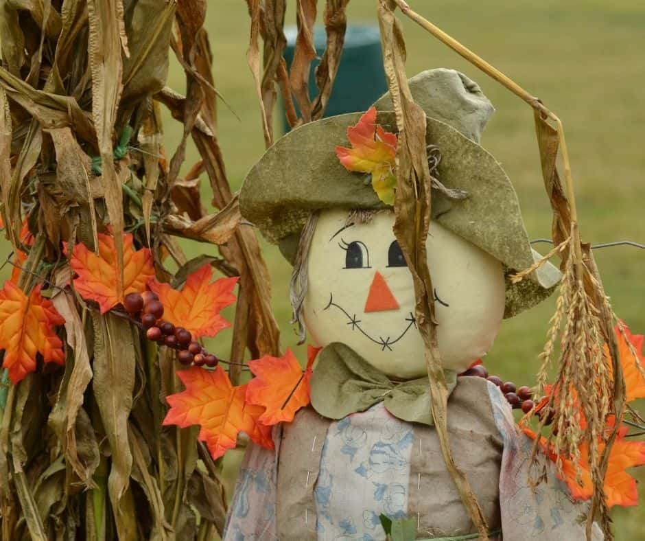 Photo of whimsical scarecrow and fall leaves.